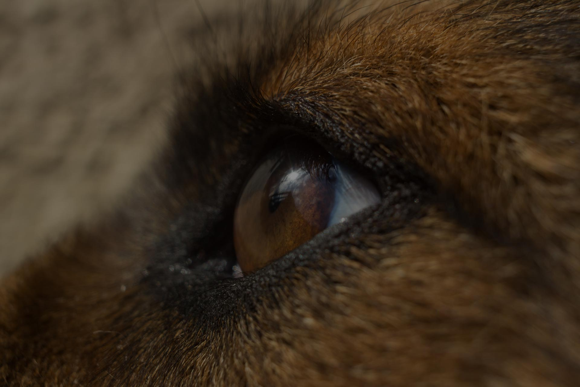 Beautifull Dogs eye